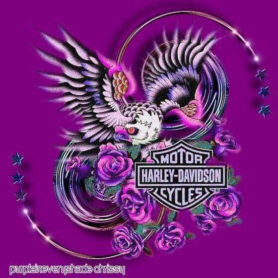 500 Harley Davidson Logo S Ideas Harley Davidson Logo Harley Davidson Harley