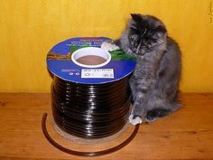 How To Protect Cables And Cords From Kitty Teeth Cat Proofing