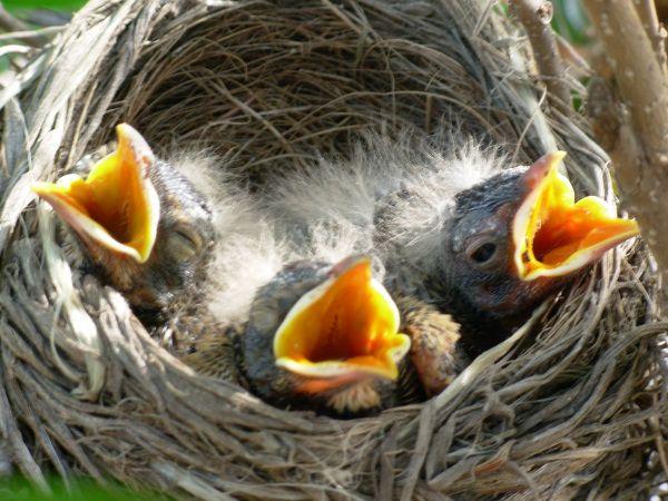 The Singing Of Birds Birds Baby Animals Cute Baby Animals
