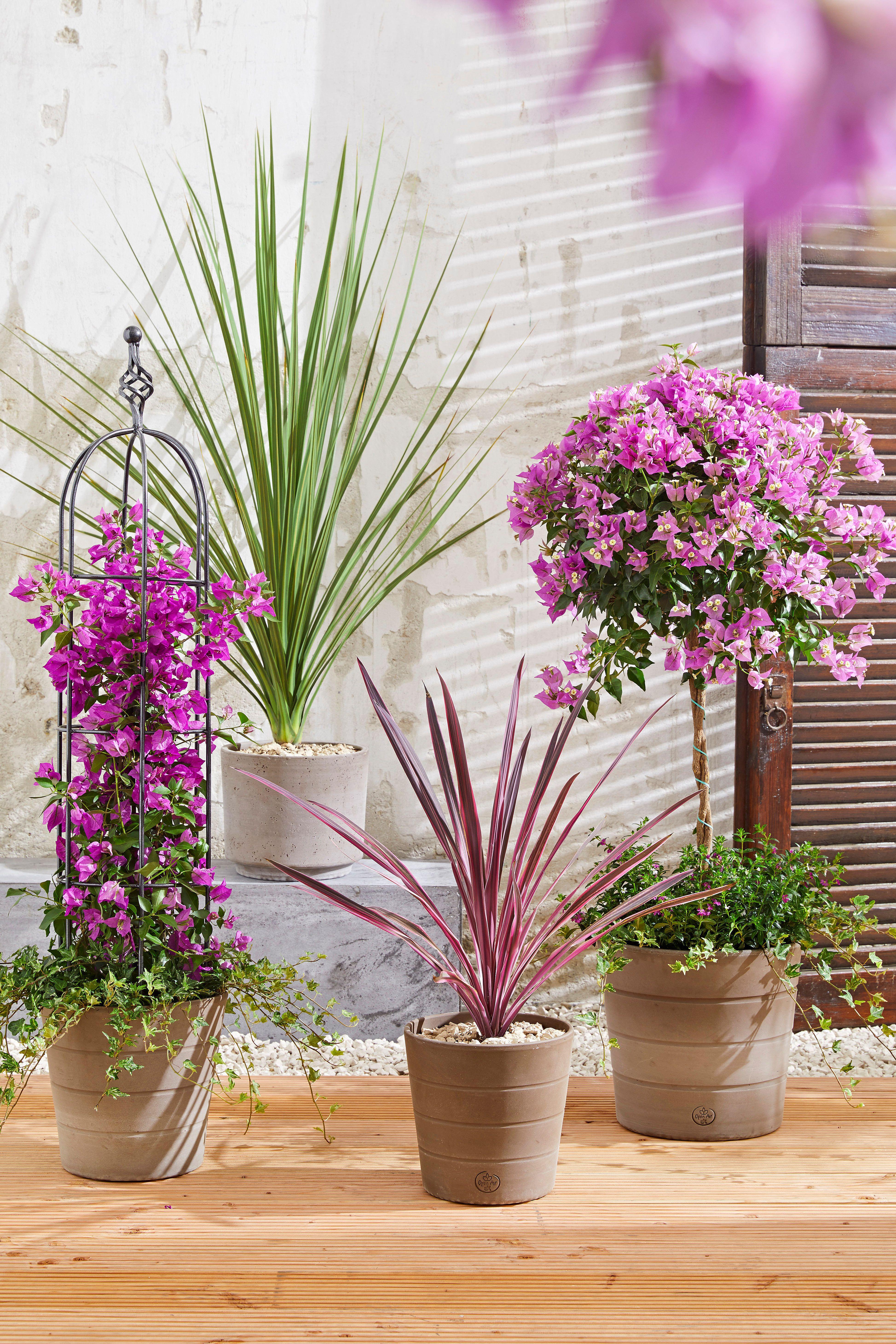 Traumhafte Blumen Fur Den Sommer Sommerblumen Garten Pflanzen