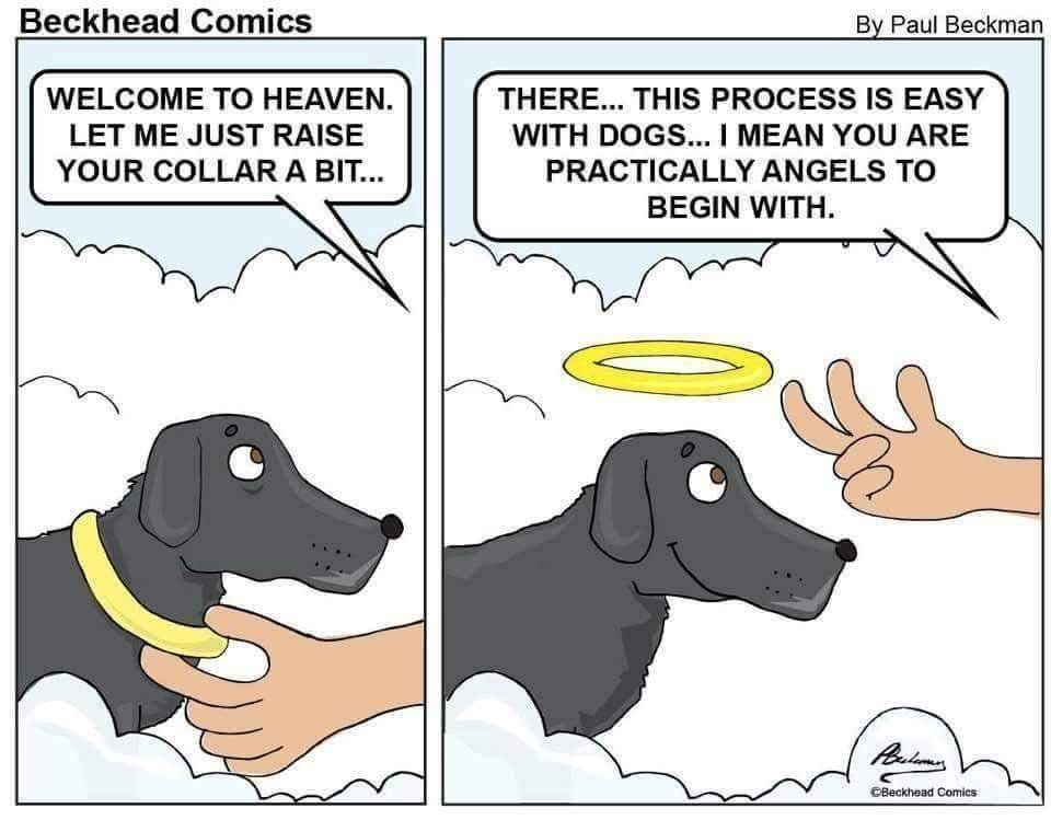All Dogs Go To Heaven Lolsnaps Funny Animal Memes Funny Dogs Cute Animals