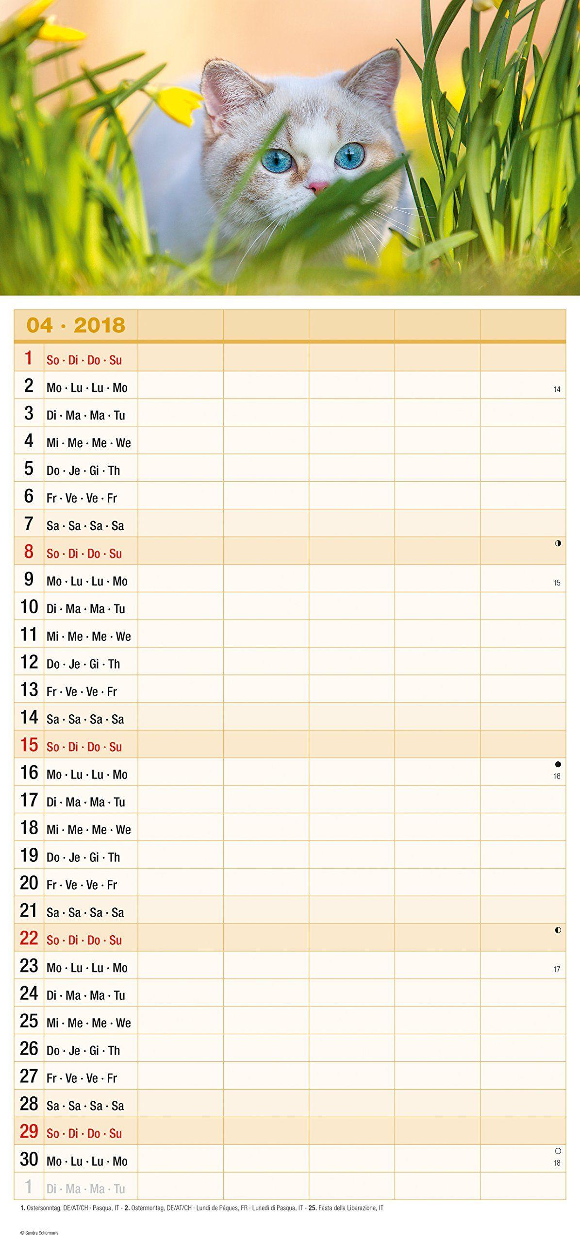 """Calendario da muro della famiglia /""""Gatti/"""" 2019 21x45 cm"""