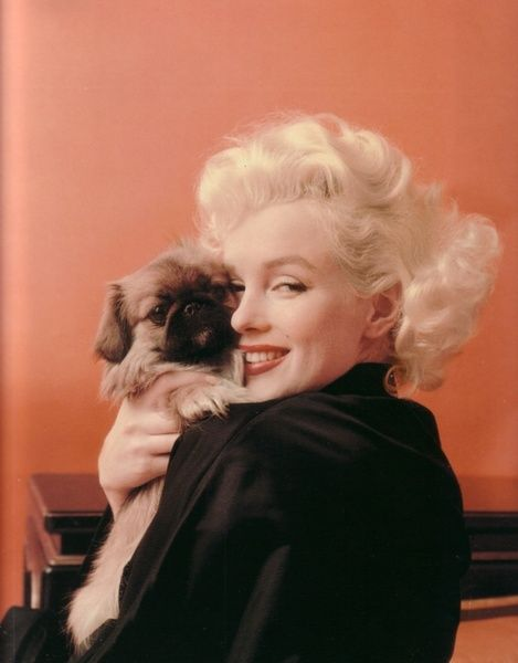 Marilyn Monroe with adorable Peke puppy. Looks like those two enjoy cuddling!