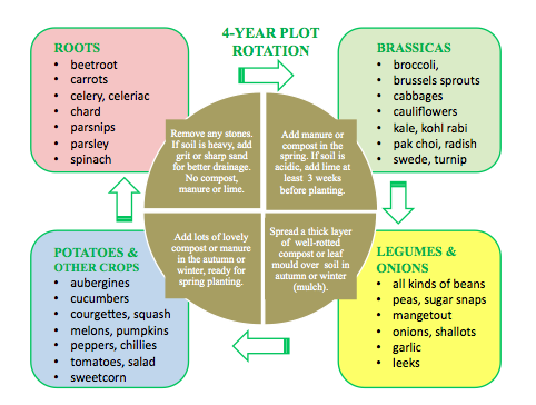 Crop rotation give it a go http www woollygreen com 2014 02 07