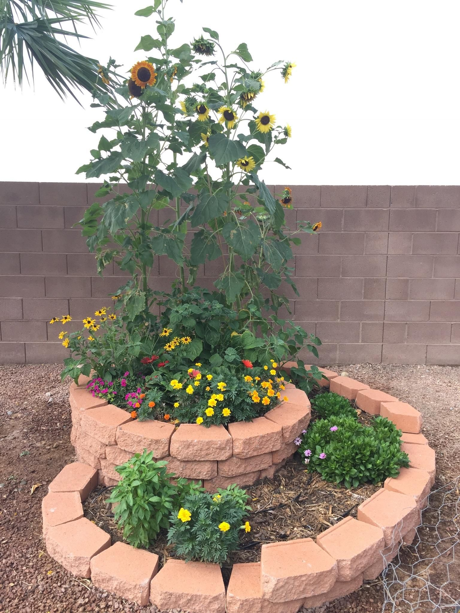 Spiral Flower And Herb Garden In Las Vegas #gardening #garden #DIY #home  #flowers #roses #nature #landscaping #horticulture