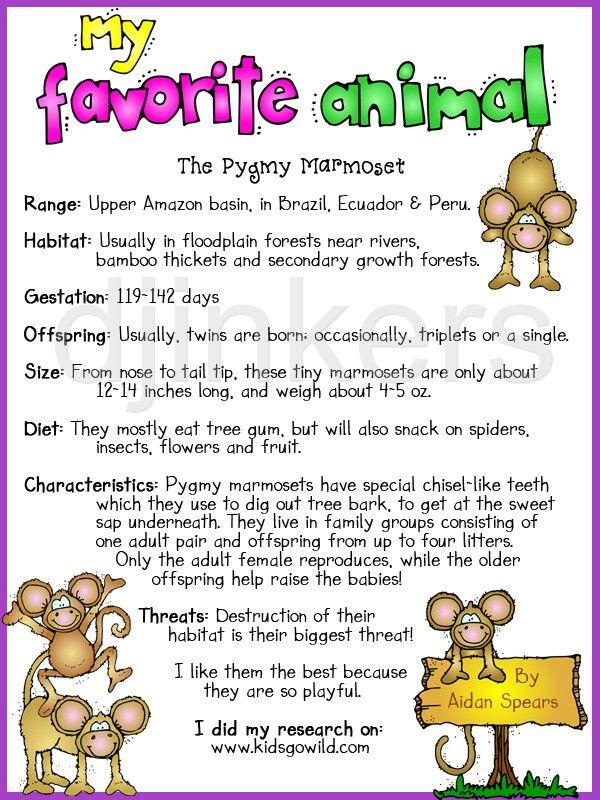 my favorite animal, animal report, monkey clip art, marmoset ...