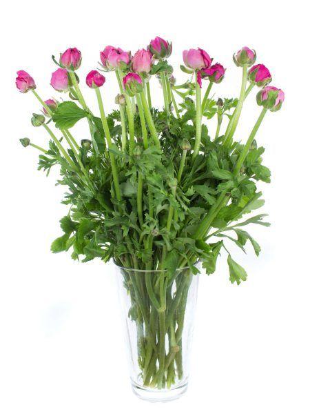 Ranunkeln Bonbon Pink Blumen Im April Hochzeit Pinterest