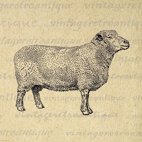 Frankenschafe Frankenschaf Sheep Breeds Colour Printing from 1925 Reprint