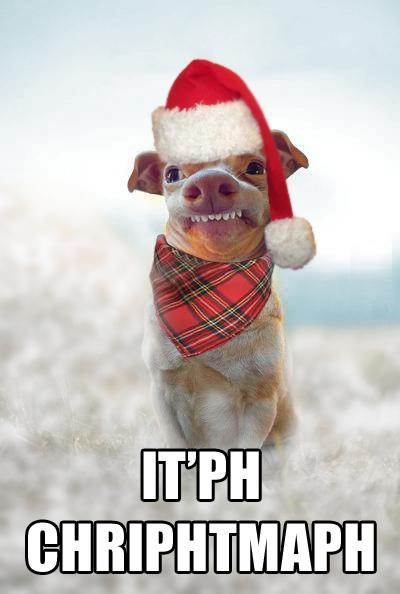 Dog Christmas Meme.Phteven Tuna The Dog Image Gallery List View Funny