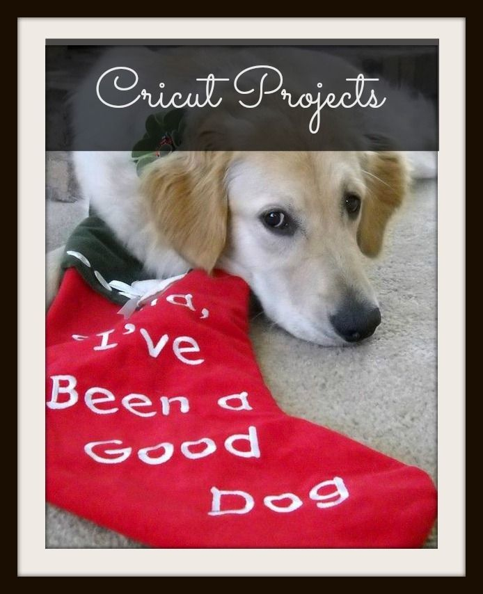 Pin By Golden Youngies Join The Youngie Revolution To Age Well And Live Retirement Right On Cricut Projects Merry Christmas Dog Dog Friends Christmas Dog