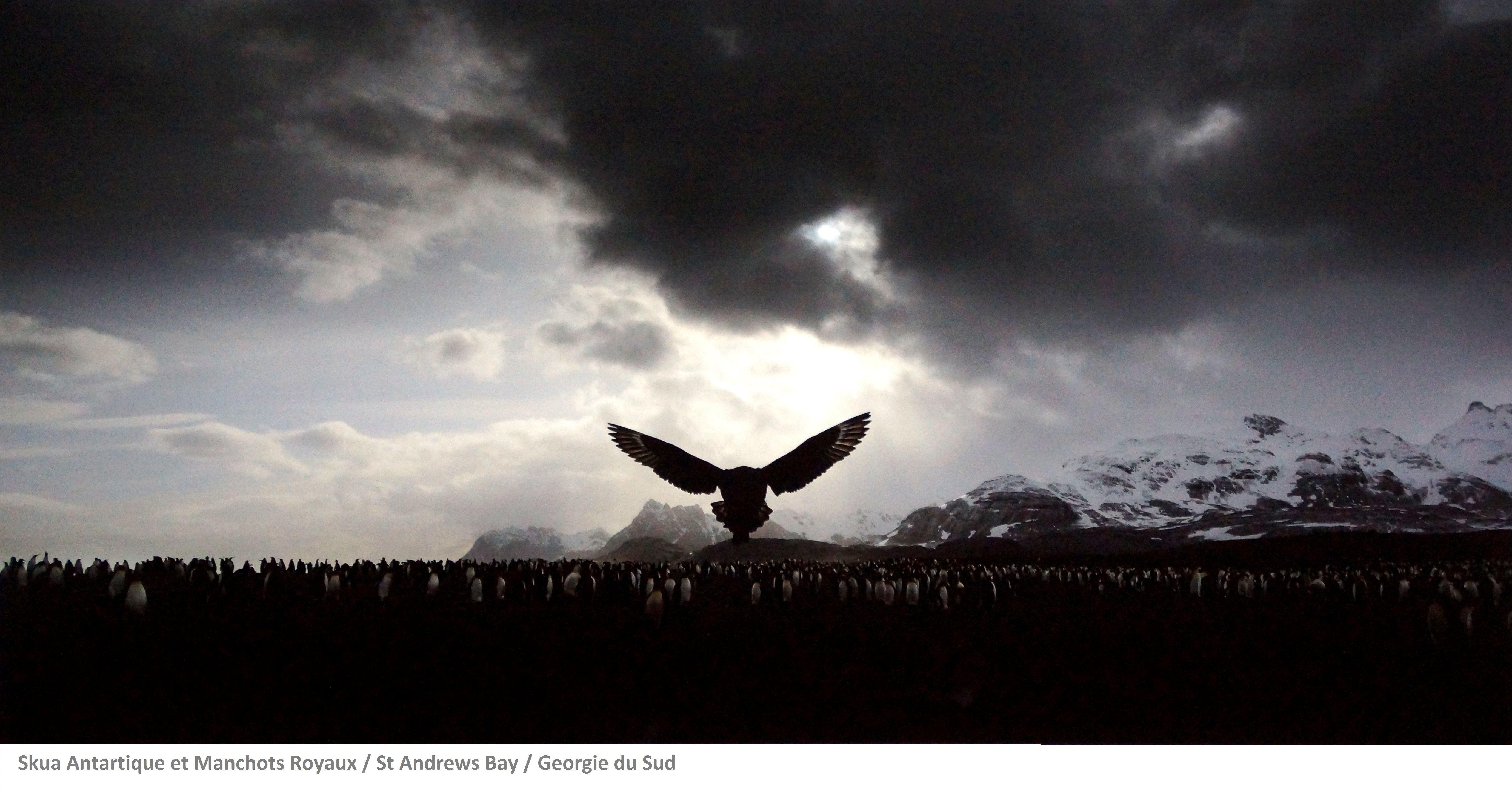 2015 Douzième festival de la photo La Gacilly - Nourrir la planète / Vincent Munier, né en 1976 à Épinal, est l'un des plus réputés photographes animaliers au monde. Traquant, captant avec poésie les espèces venues du froid et la vie sauvage dans des paysages enneigés.