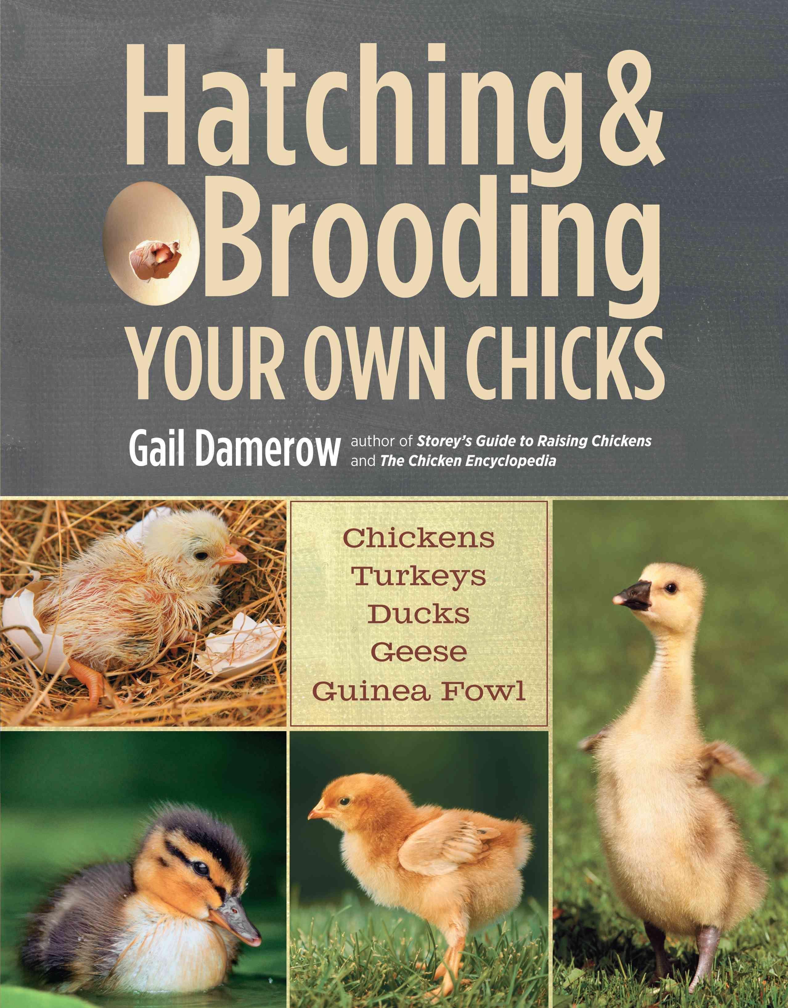hatching u0026 brooding your own chickens turkeys ducks