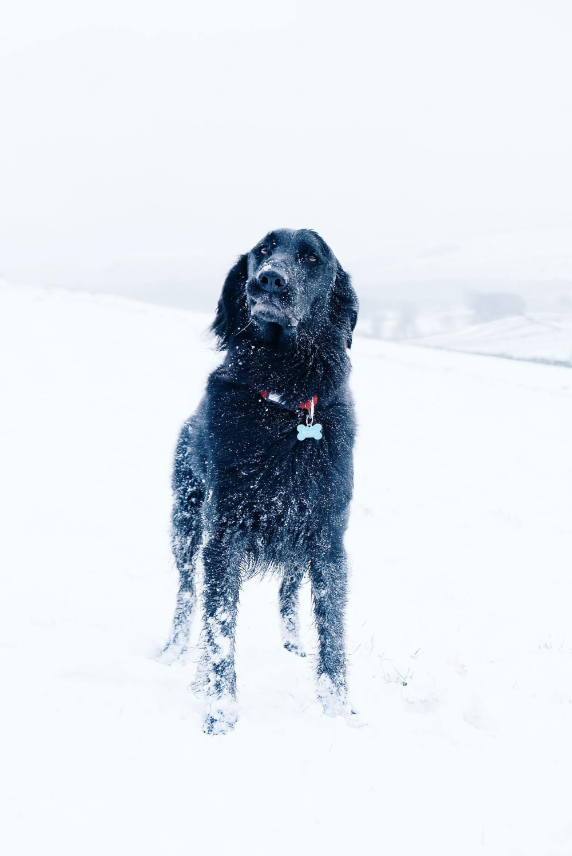 Tumblr | Pet insurance quotes, Dog training near me, Black ...