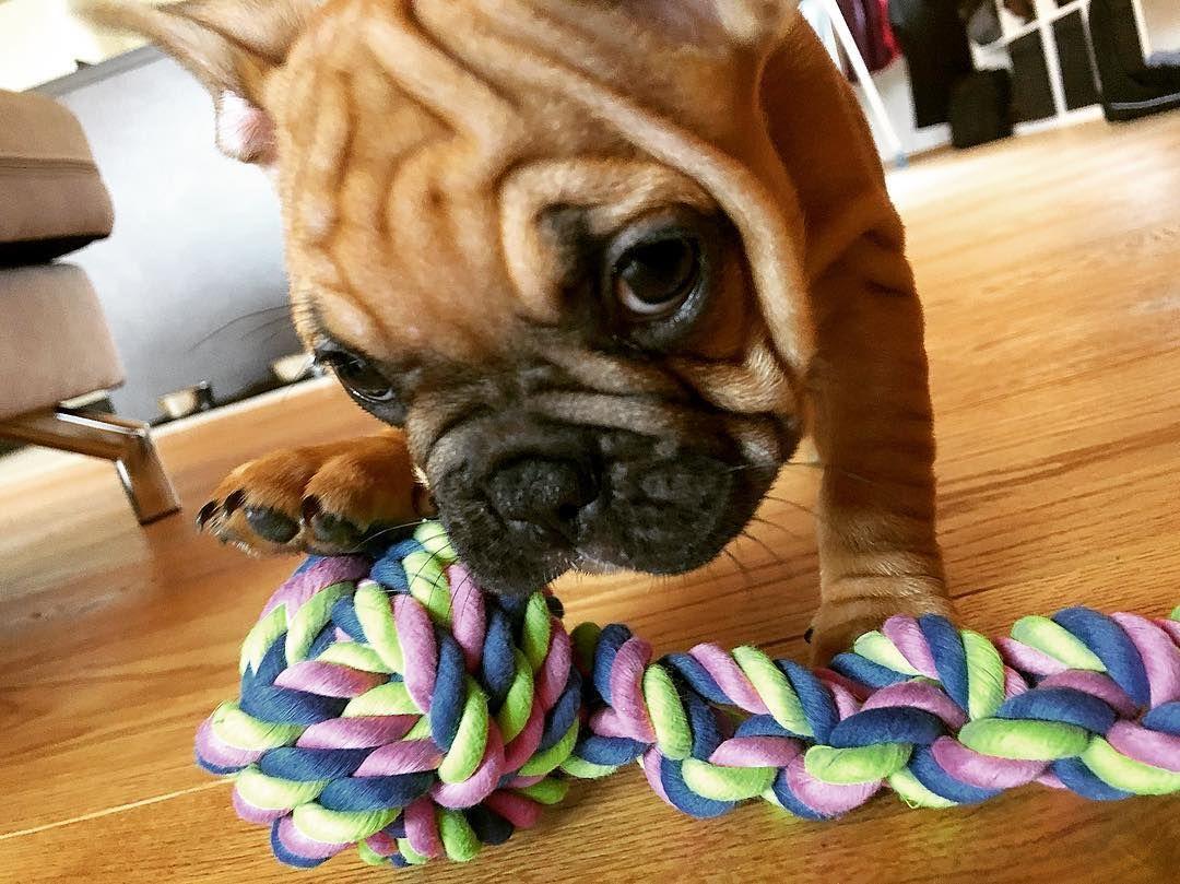 Spielzeug Bulldog