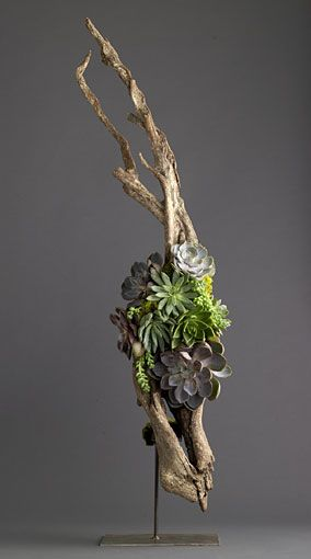 Beautiful driftwood and succulents.