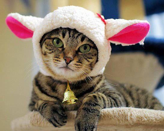 2015年の干支は、ひつじ年ですね! 羊は、毛並みに、特徴があるので、例年のフェルト素材ではなく、 シープボア(ポリエステル素材)のフェイクファーにしました! --------------------------------------------- 今年も、おはりこむすめさんに...