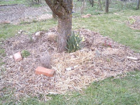 Fancy Was ist Permakultur Und wie setz ich das f r meinen Garten um F r ein
