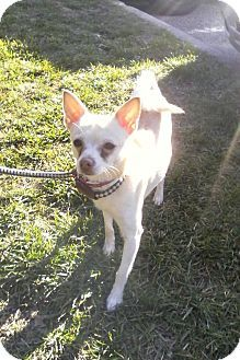 Pin By Esther Sublett On Adoption Group Pets Chihuahua