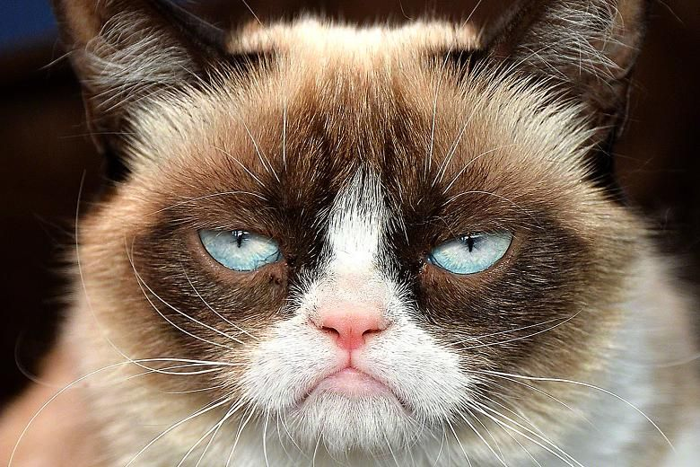 grumpy cat рисунок