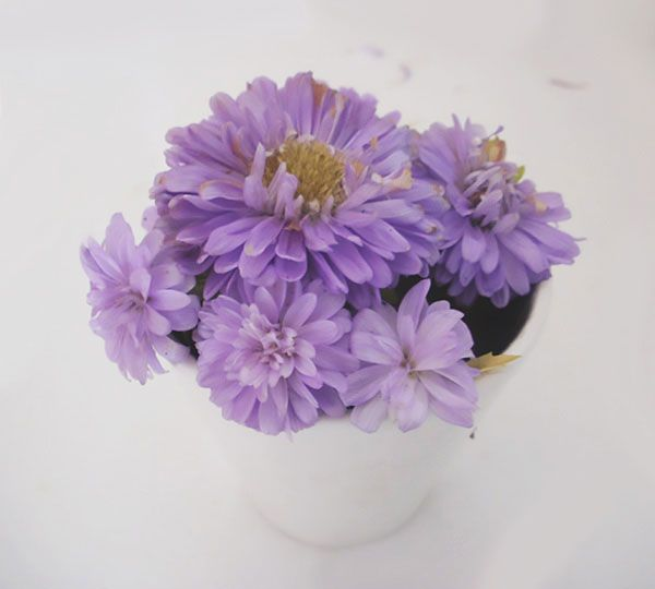Dwarf Asters; More Pictures Here Http://Flower-Garden-Design.Com