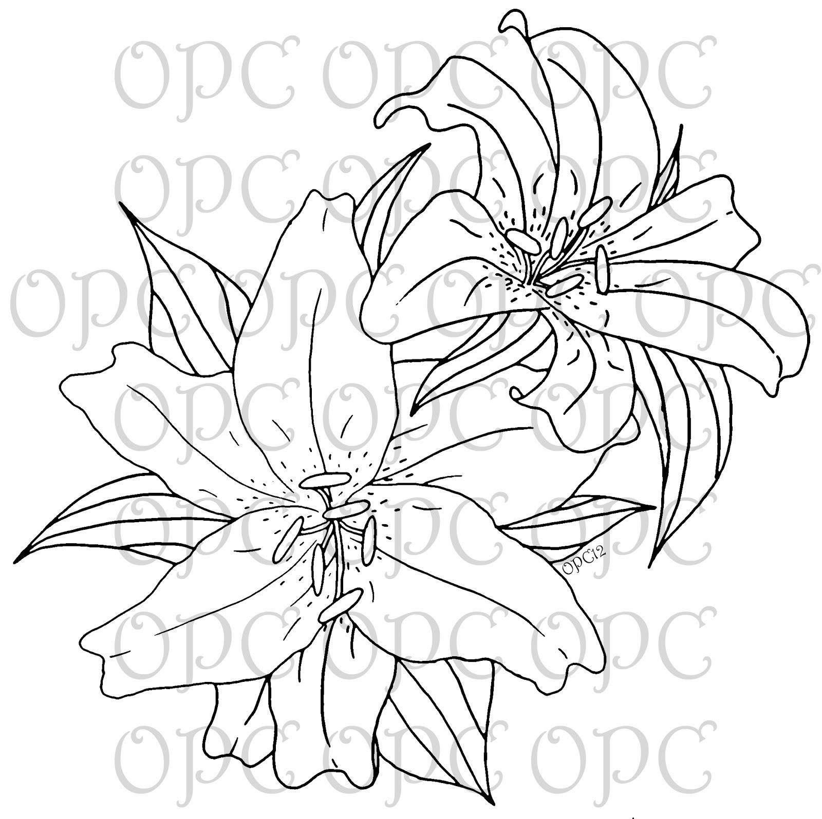 Oriental Lilies Are Known For Their Fragrant Perfume