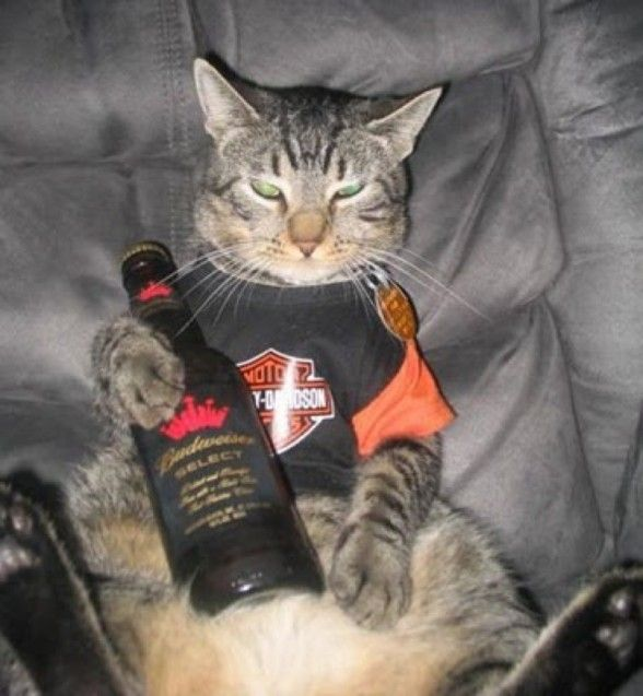 cat beer bottle animal - photo #46