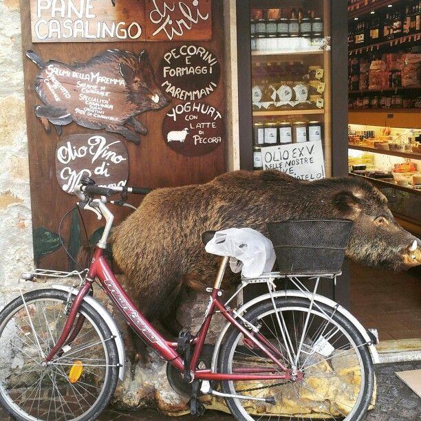 A boar in front of the door. #massamarittima #maremma #toscana #tuscanyfood #food