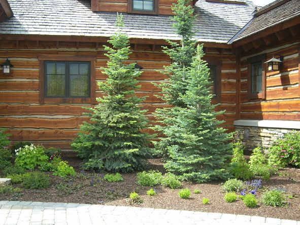 landscaping easy ideas