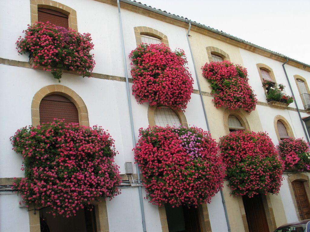 Balcones floridos varios pinterest balcones hermosa y flores - Jardineras para balcones ...