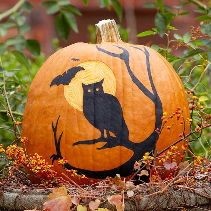 Painted And Etched Pumpkin With Owl Theme