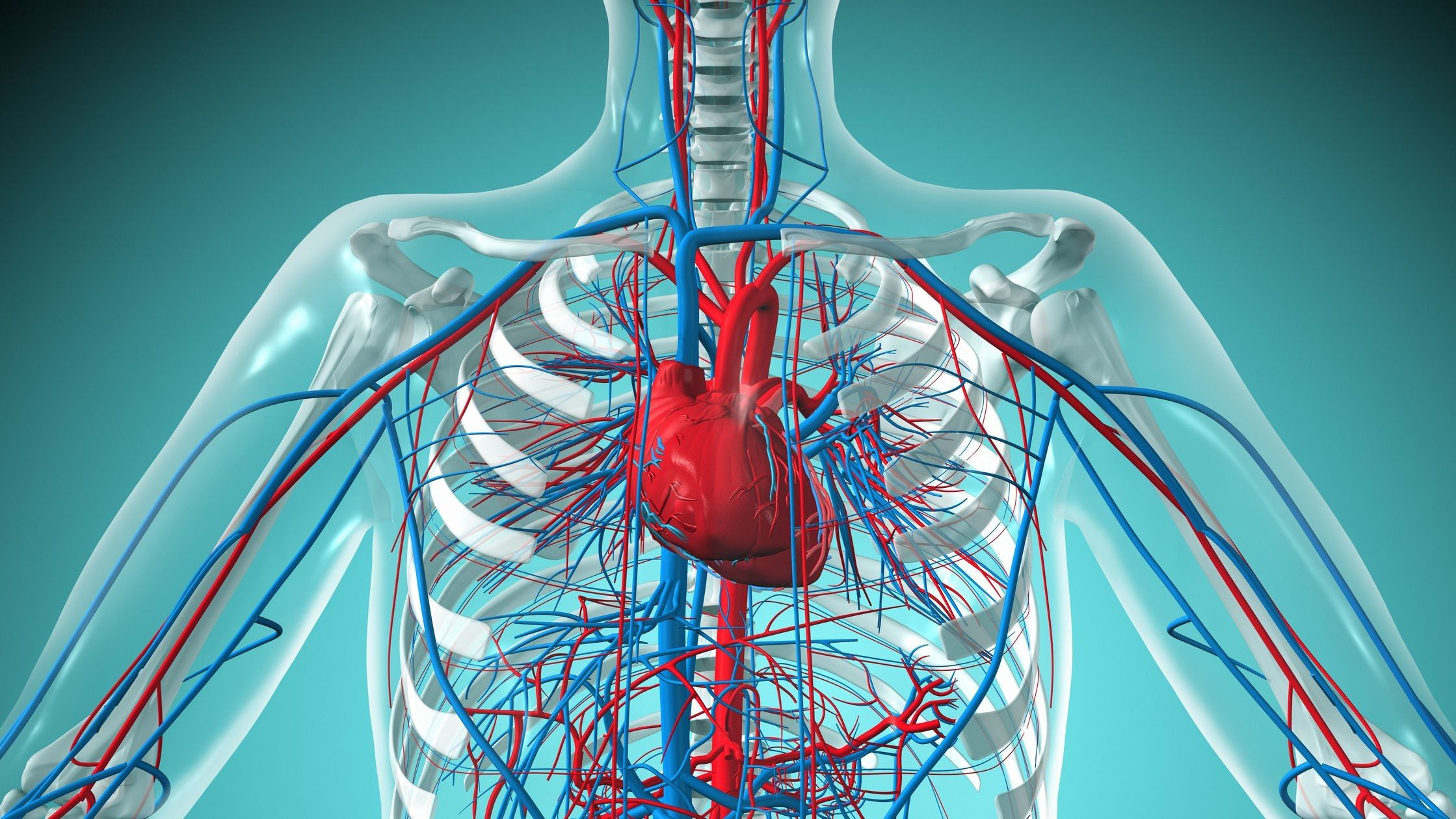 7 Best Of The Cardiovascular System Di