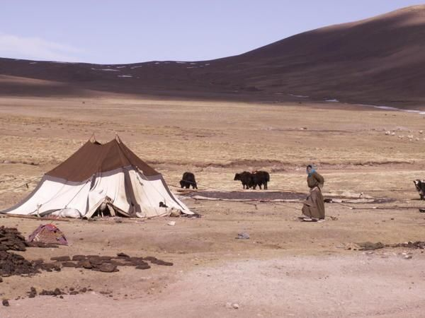 tent with nomadic herd & ancient bible times tents... | Science - Physics/Construction ...