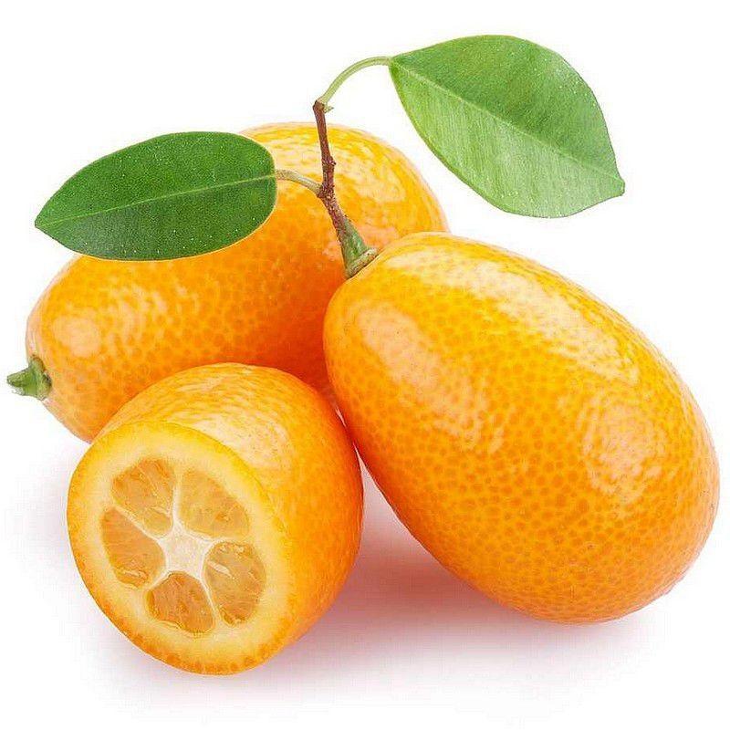 Fortunella Margarita Kumquat Ovale Faux Citrus Ensemence