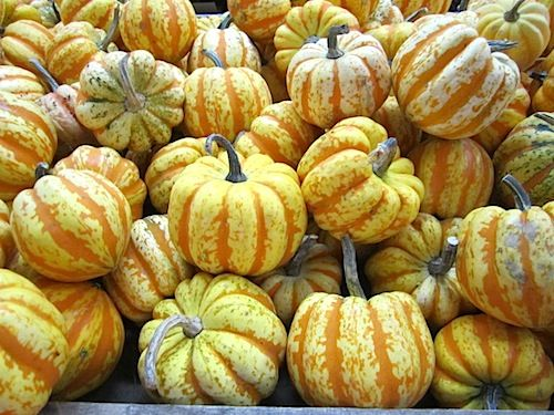 It's October! Why aren't you at Carver's Orchard?