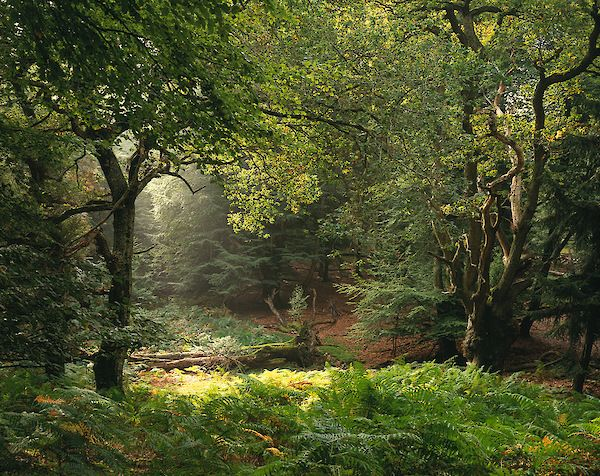The New Forest England Landscape Nature Scenery