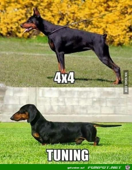 Super Tuning Jpg Funny Dachshund Daschund Puppies Dog Memes