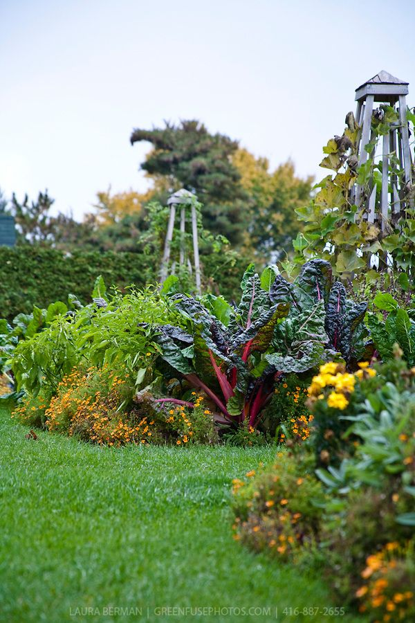 The Colors And Textures Of A Mixed Vegetable Herb And Flower Garden In Autumn As It Begins To Decline Vertical Herb Garden Garden Herb Garden