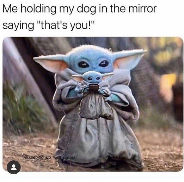 So Accurate Memes Meme Babyyoda Animals Dogs Yoda Funny Funny Memes Funny Relatable Memes