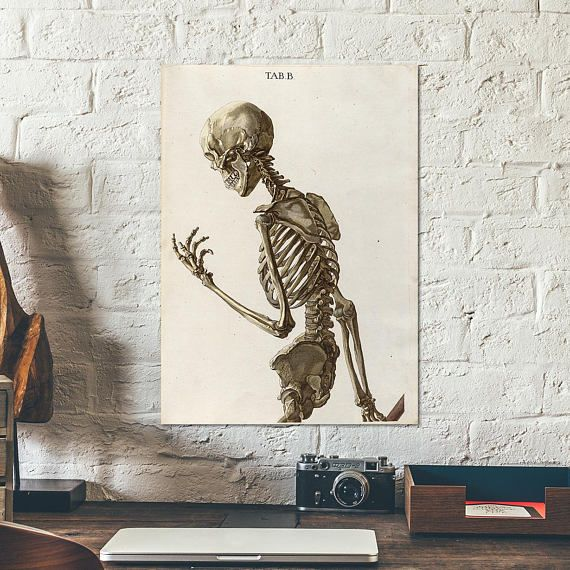 Posing skeleton from old book on human anatomy, 1767 - Anatomy ...