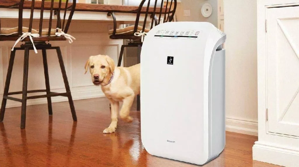 Best Air Purifier For Pets 2020 Reviews & Top Rated