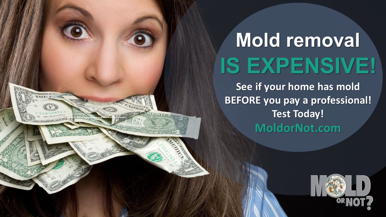 80 of Homes Have ToxicMold. Does yours? Find out today