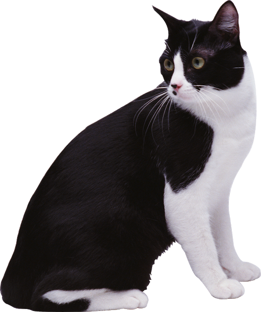 Download Black White Cat Png Image With Transparent Background Cats Image Cat White Cat