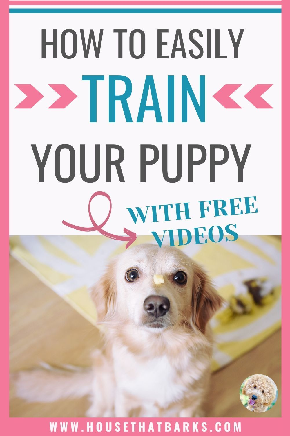 Learn How To Easily Train Your Puppy Dog To Sit Heel Down And