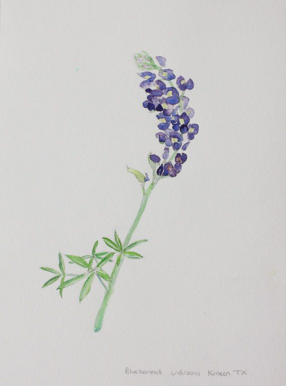 f21355302c69d Original watercolor Bluebonnet, Texas wildflower | Paintings | Texas ...