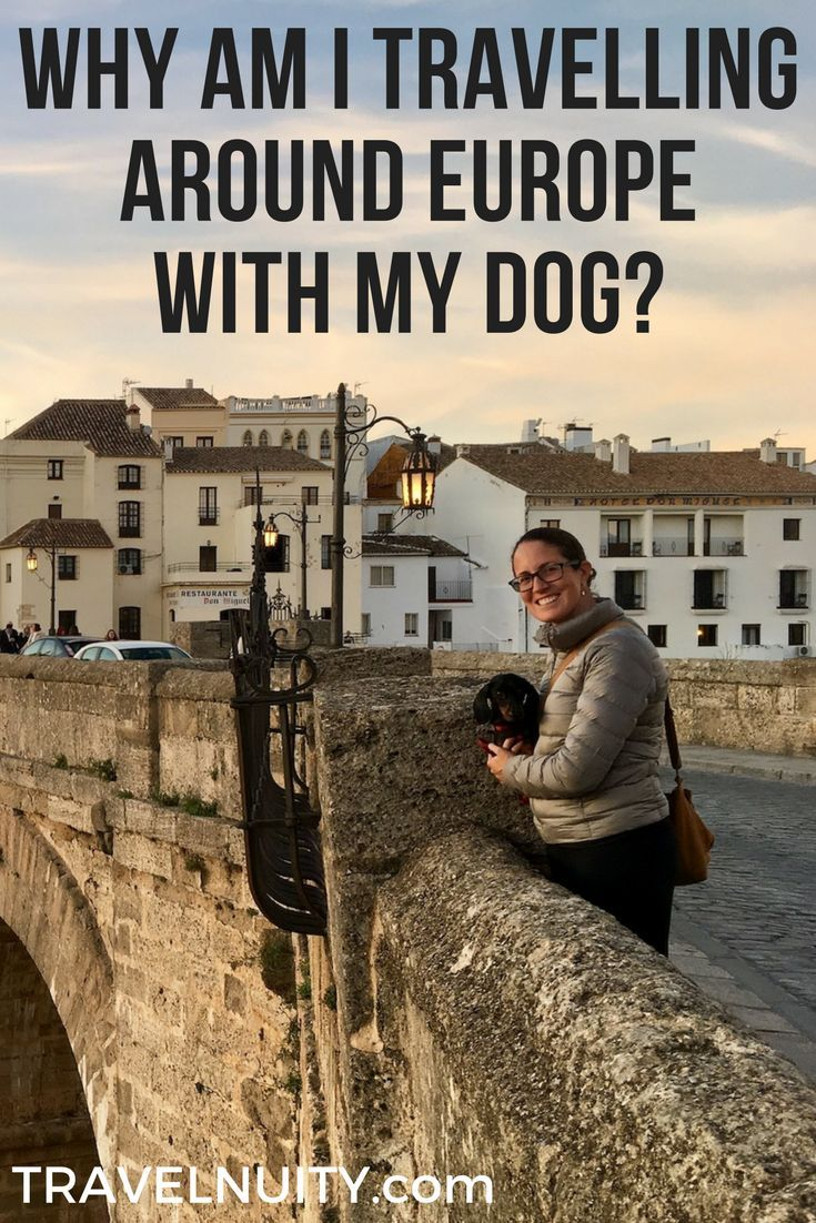 traveling to europe with a dog