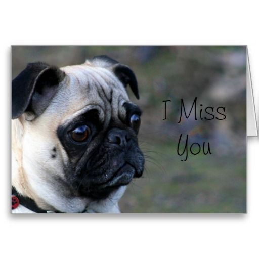 I Miss You Pug Greeting Card Zazzle Com Birthday Pug Happy