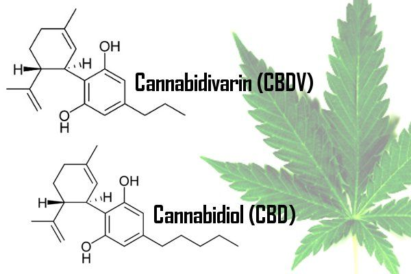 #Cannabidivarin (CBDV) May Help Treat Epileptic Seizures http://goo.gl/4my6V9  #cannabis #epilepsy #seizures #MME