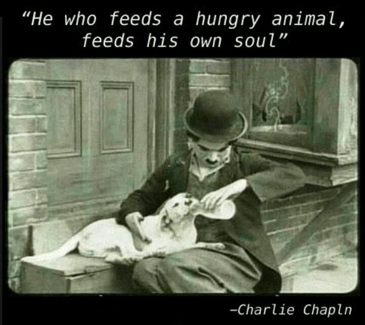 He Who Feeds A Hungry Animal Feeds His Own Soul Charlie Chaplin