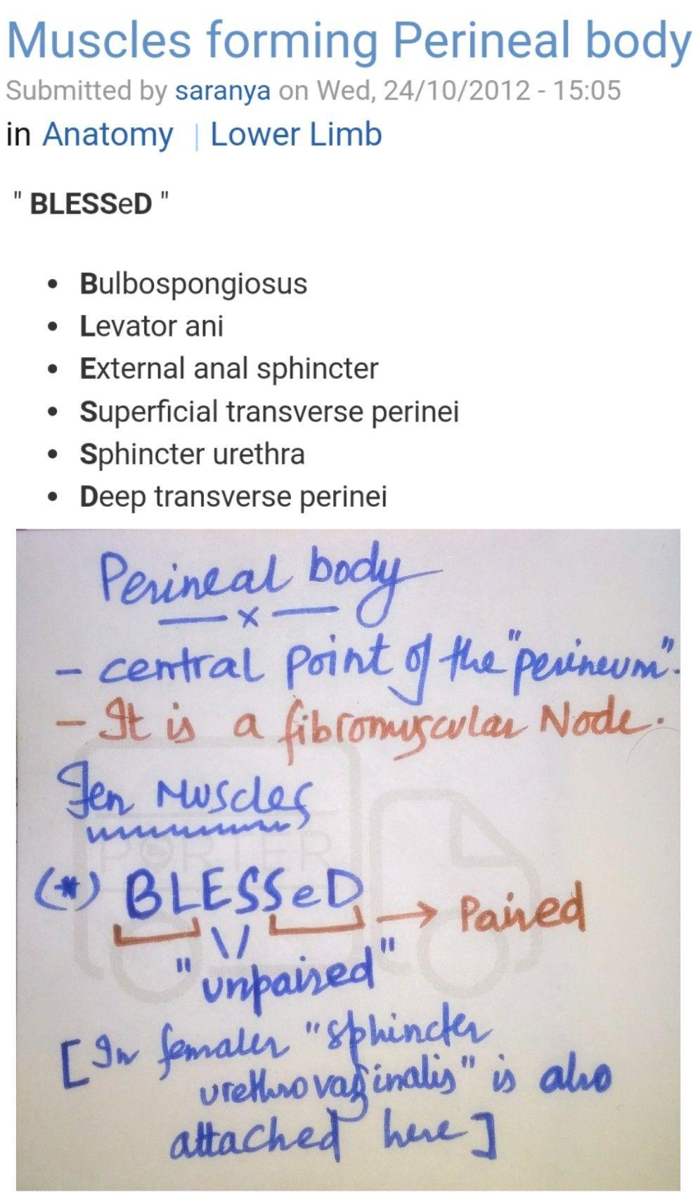 Perineal body ... ( Note: Bulbospongiosus & \