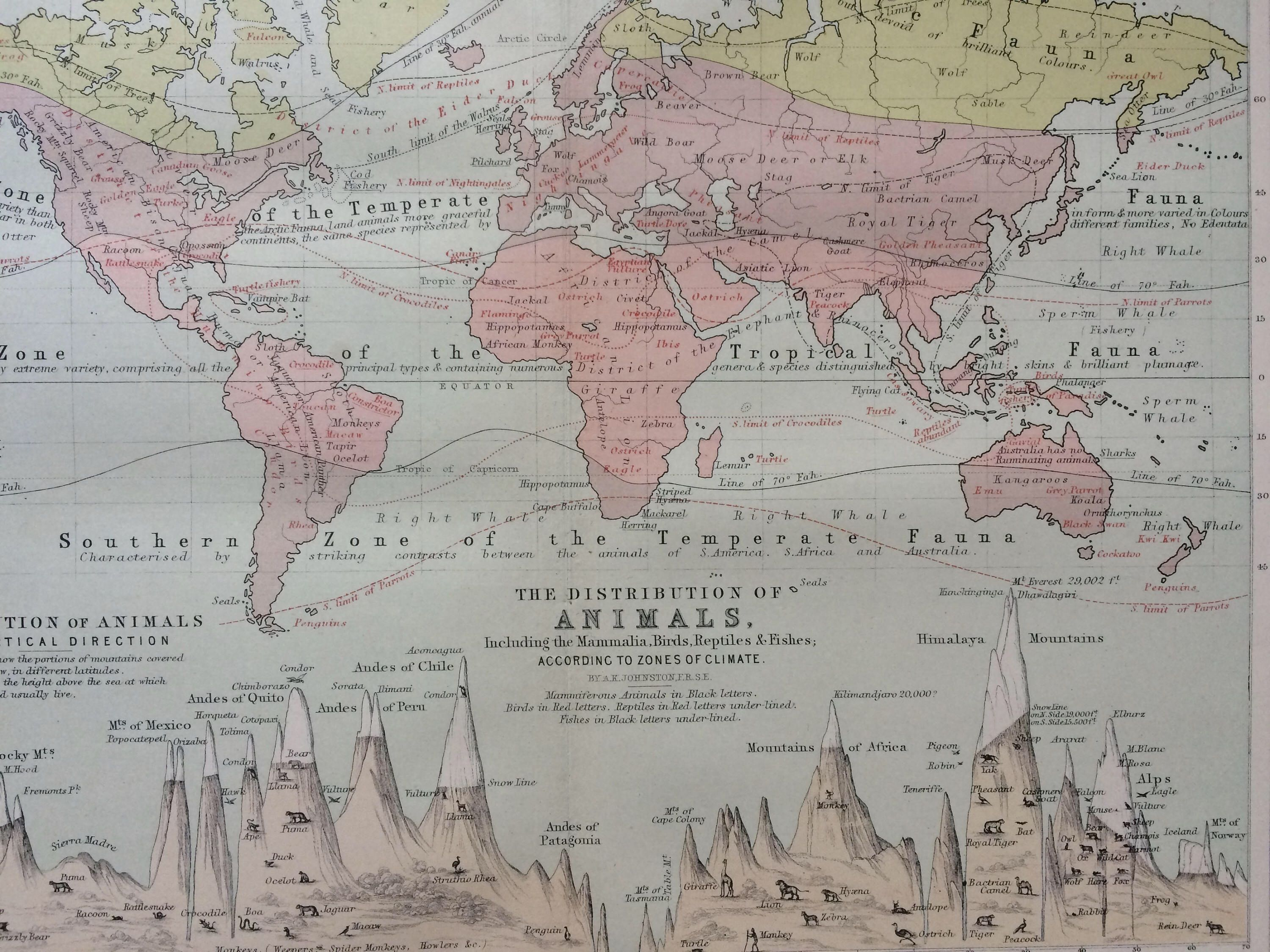 1873 original antique world map showing the distribution of animals 1873 original antique world map showing the distribution of animals according to zones of climate and gumiabroncs Image collections